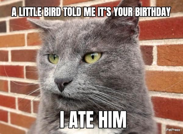 cat birthday meme - bird