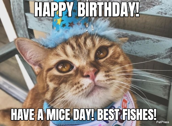 cat birthday meme - greeting