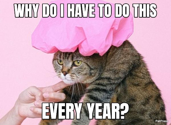cat birthday meme - fed up