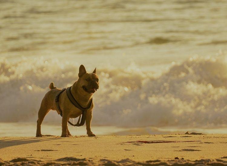 beach dog names for a pet dog