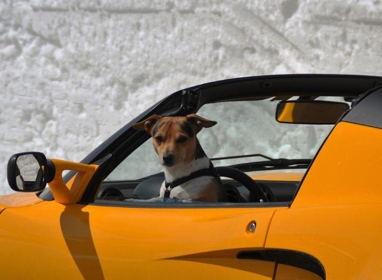 car dog names for a pet dog