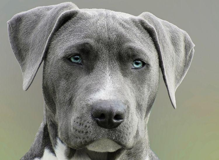 evil dog names for a pet dog