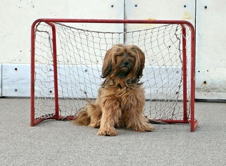 hockey dog names for a pet dog