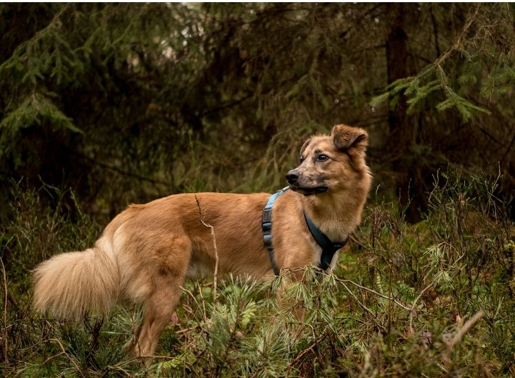 nature dog names for a pet dog