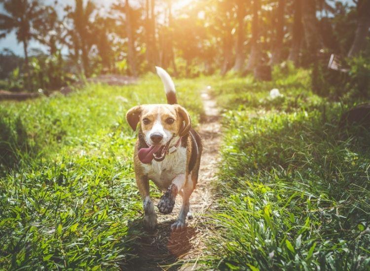 spiritual dog names for a pet dog