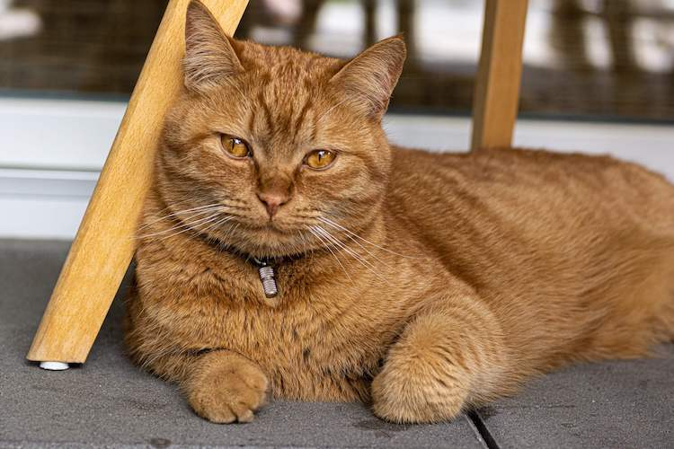 brown cat names for a pet cat