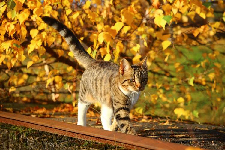 fall cat names for a pet cat