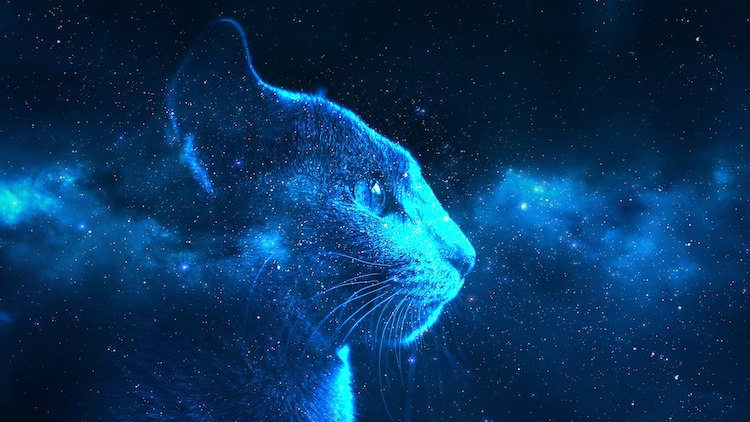 space name for cats for a pet cat