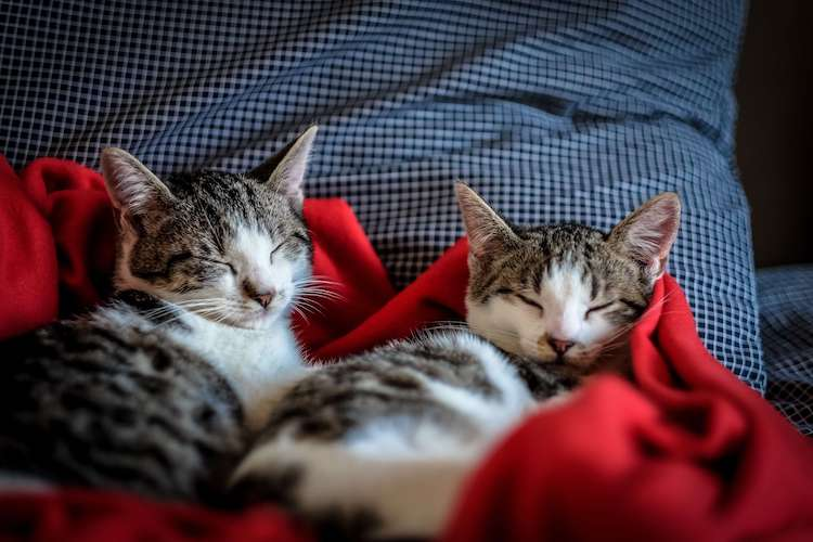 twin cat names for sibling duo cats