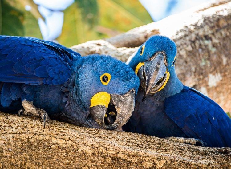 best names for a blue bird
