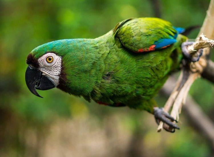 best names for a green bird