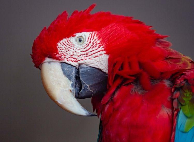 best names for a pet bird