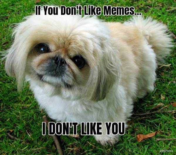 if you don't like memes? pekingese meme angry