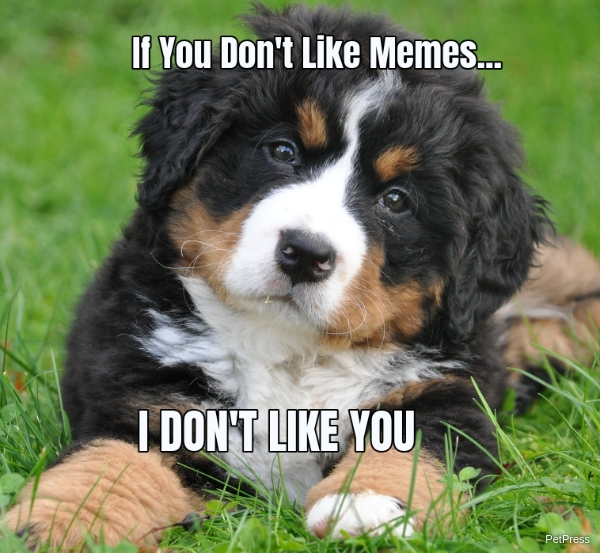 if you don't like memes? bernese mountain meme angry