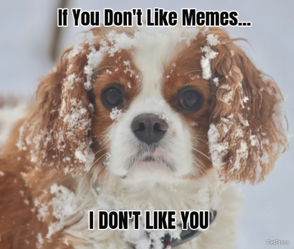 if you don't like memes? cocker spaniel meme angry
