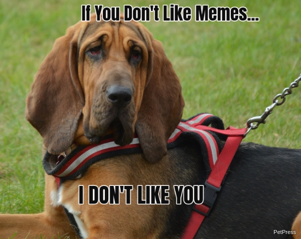 if you don't like memes? bloodhound meme angry