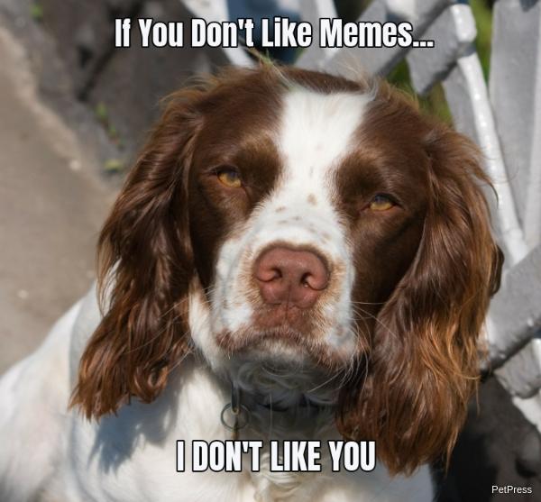 if you don't like memes? springer spaniel meme angry