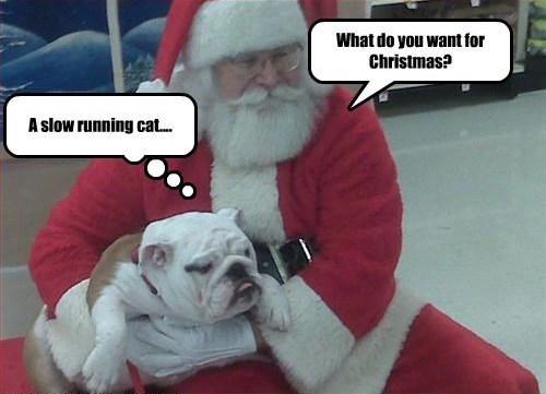 Top 15 English Bulldog Christmas Memes That Will Lift Your Spirits Up!