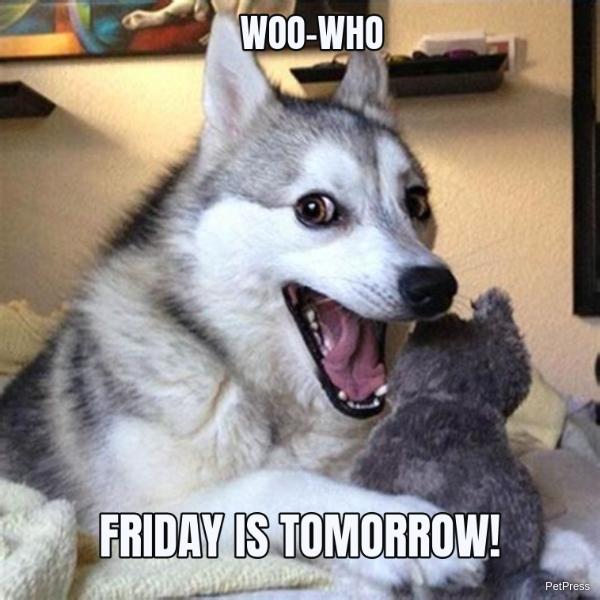Husky Friday