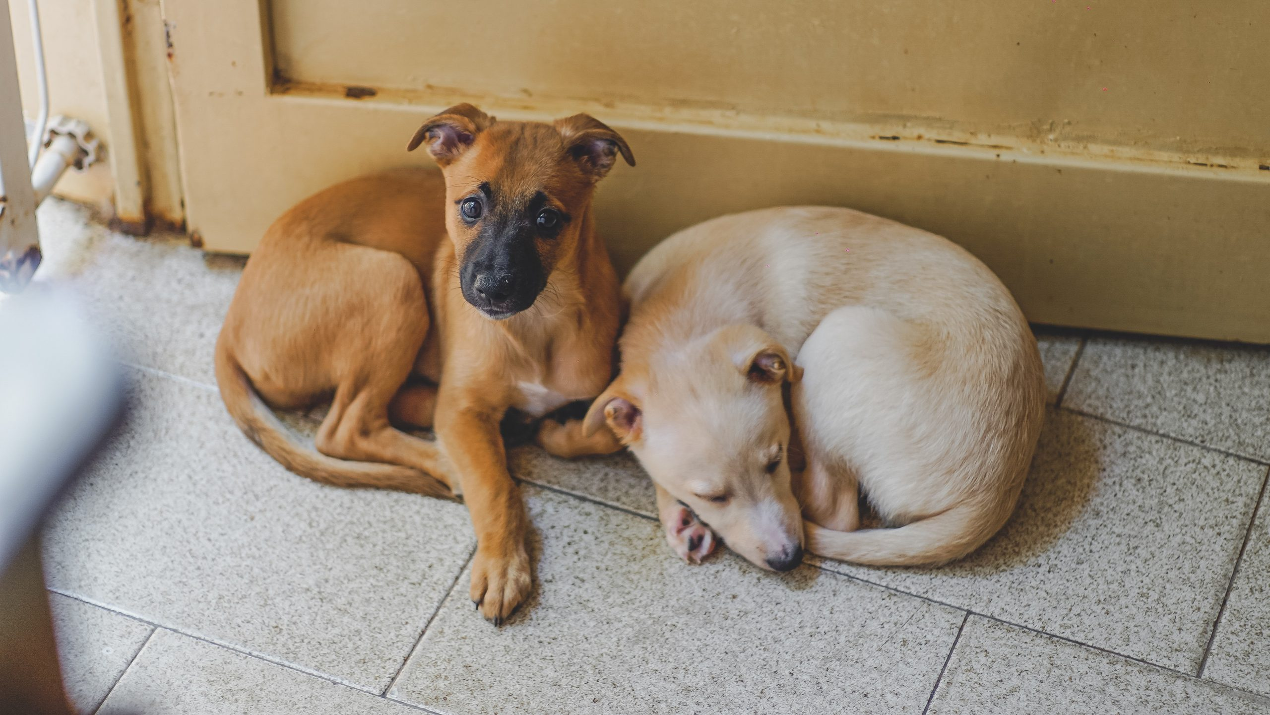 reach out to local shelter