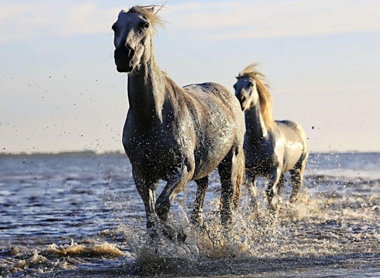 best arabian names for a horse
