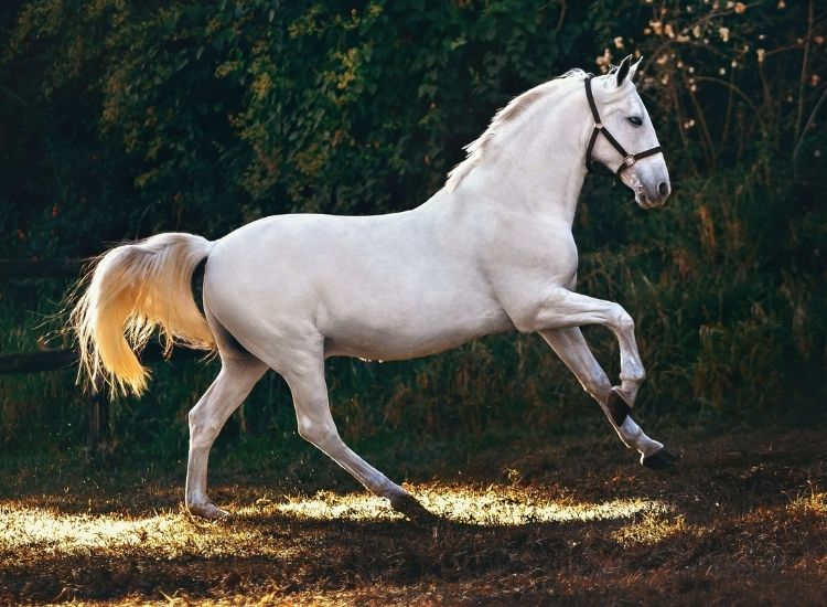 best names for a white horse