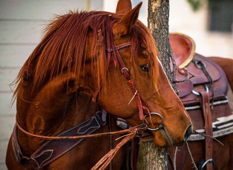 best indian horse names