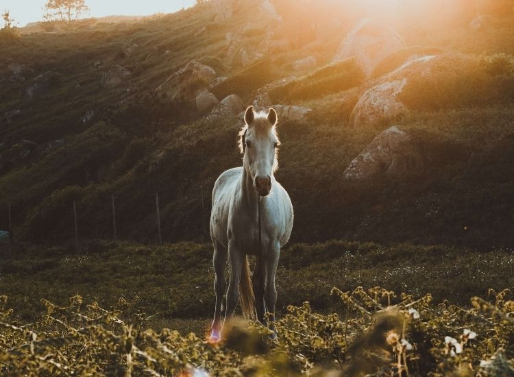 best silver horse names