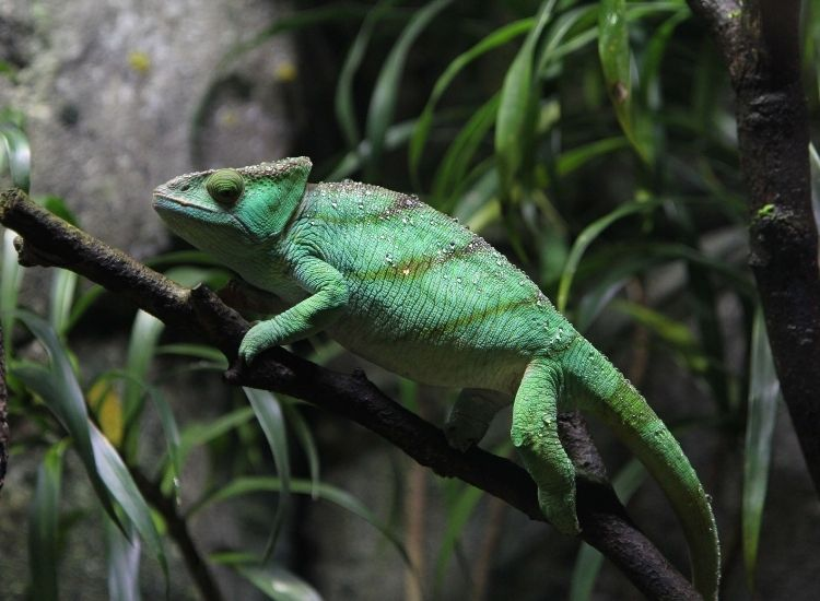 500 BEST REPTILE NAMES FOR SNAKES, LIZARDS, TURTLES, AND MORE