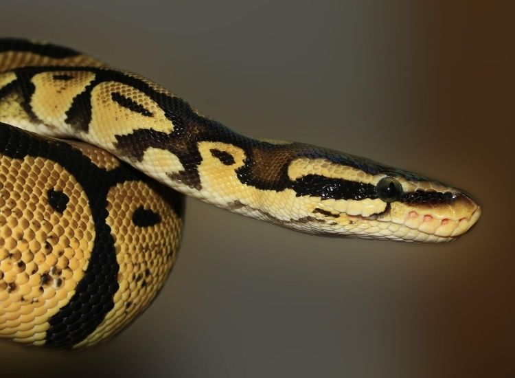 Over 500 inspiring ideas for naming your pet snake