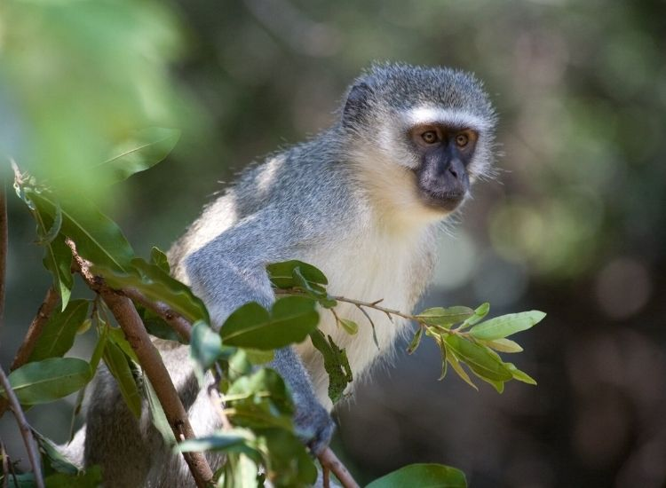 best monkey names