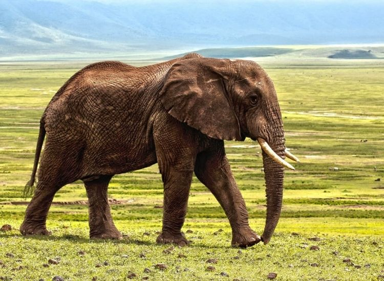 elephant names for boy and girl elephants