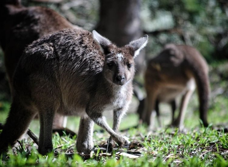 best kangaroo names