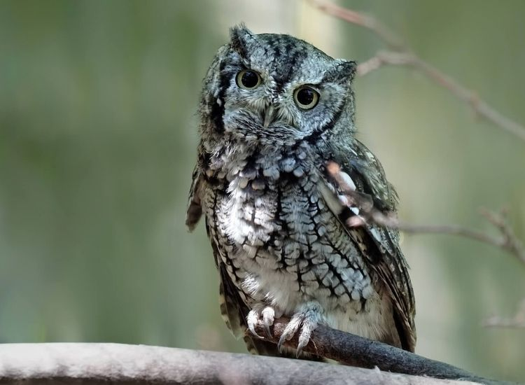 best owl names for a pet owl