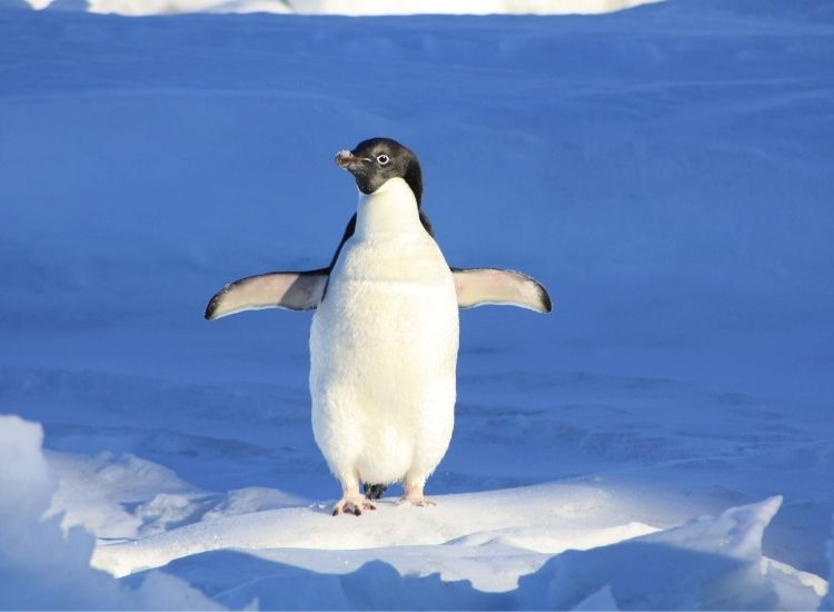 best names for a penguin