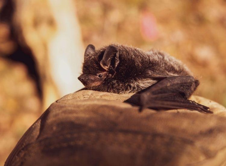 top 200 names for pet bats