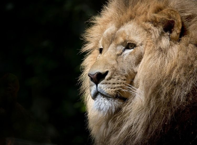 awesome lion name with meanings