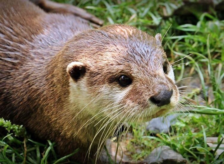 best otter names