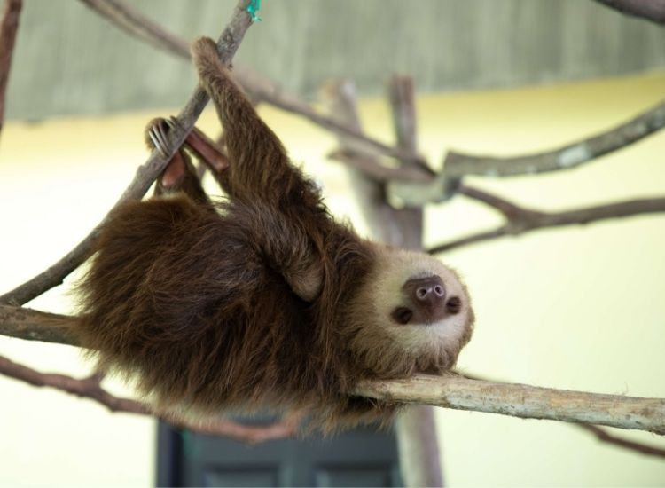 best sloth names