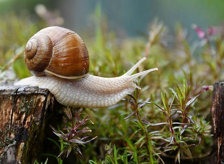 best snail names
