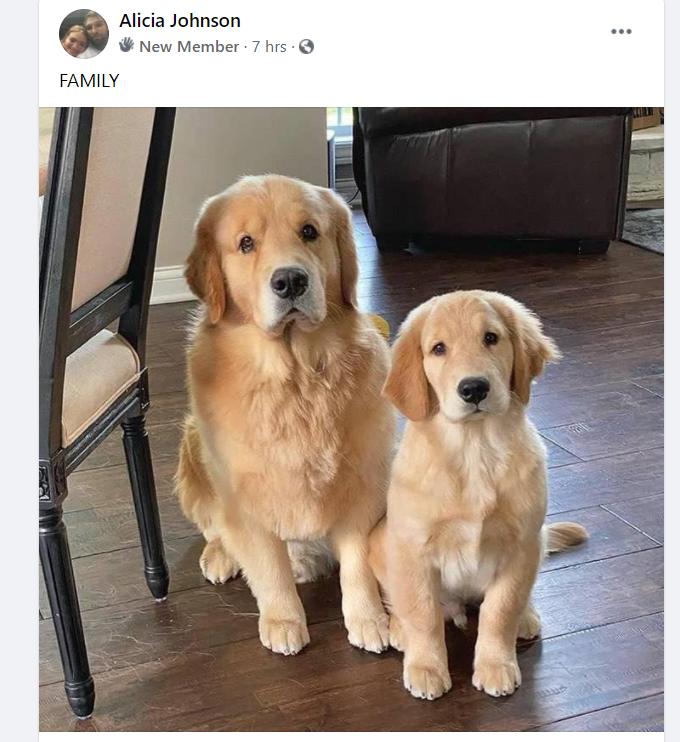 puppy scam in golden retriever group