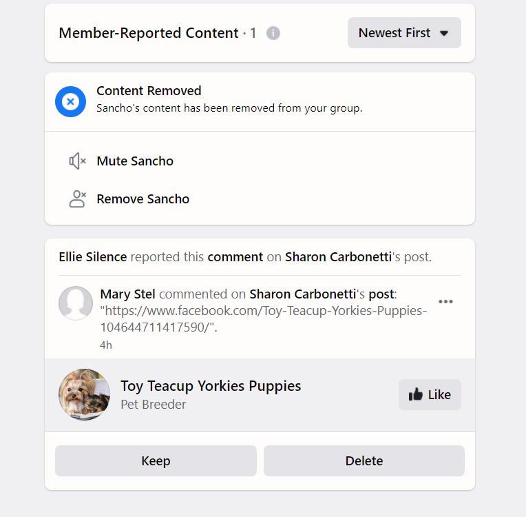 puppy scam - petpress groups 2