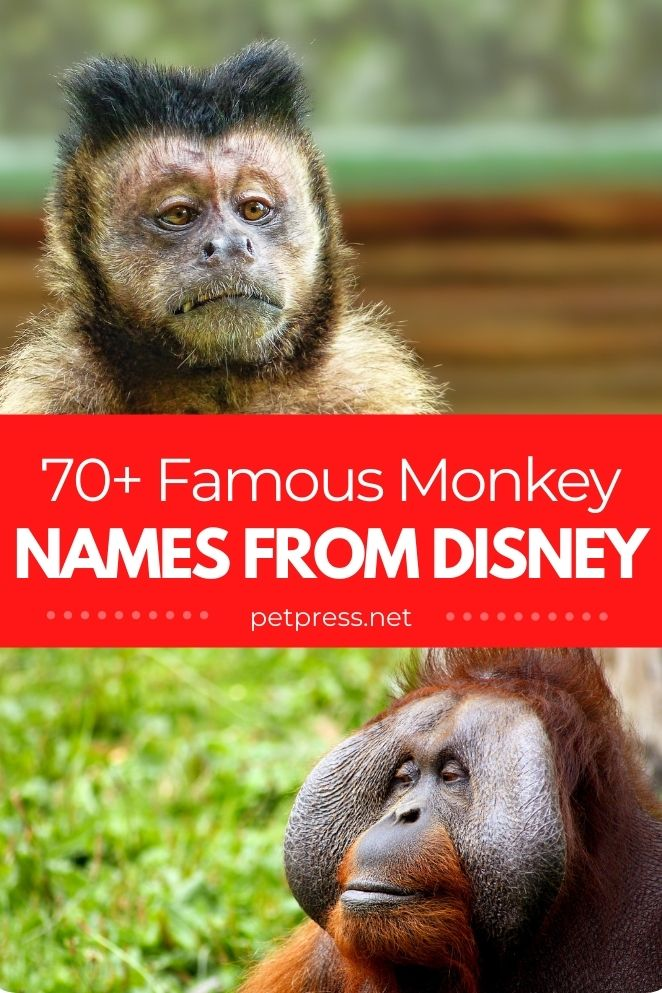 famous monkey names from disney