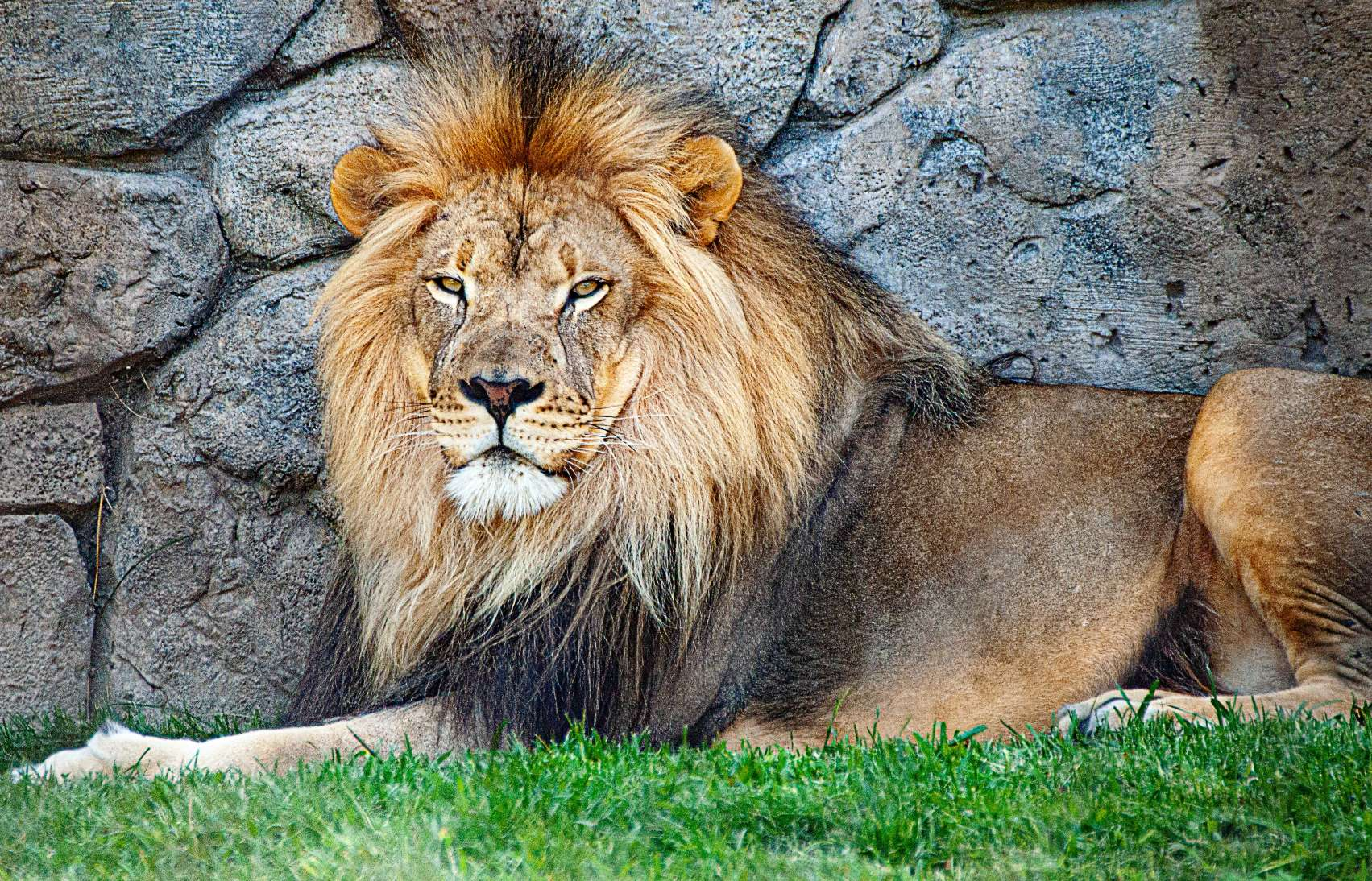 male lion names for naming a lion