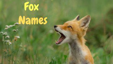 Top Funny Fox Names | PetPress
