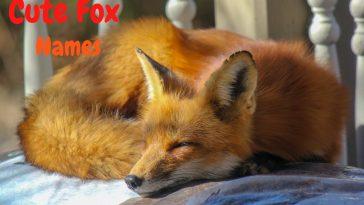 Cute name ideas for a pet fox