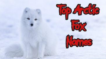 top arctic fox names ideas