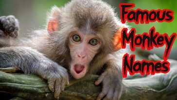 famous-monkey-names
