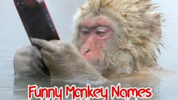 funny-monkey-names