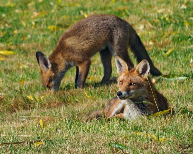 Fox Name Generator - Size